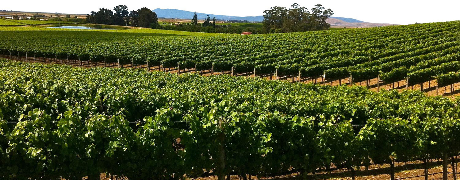 photo of wine country
